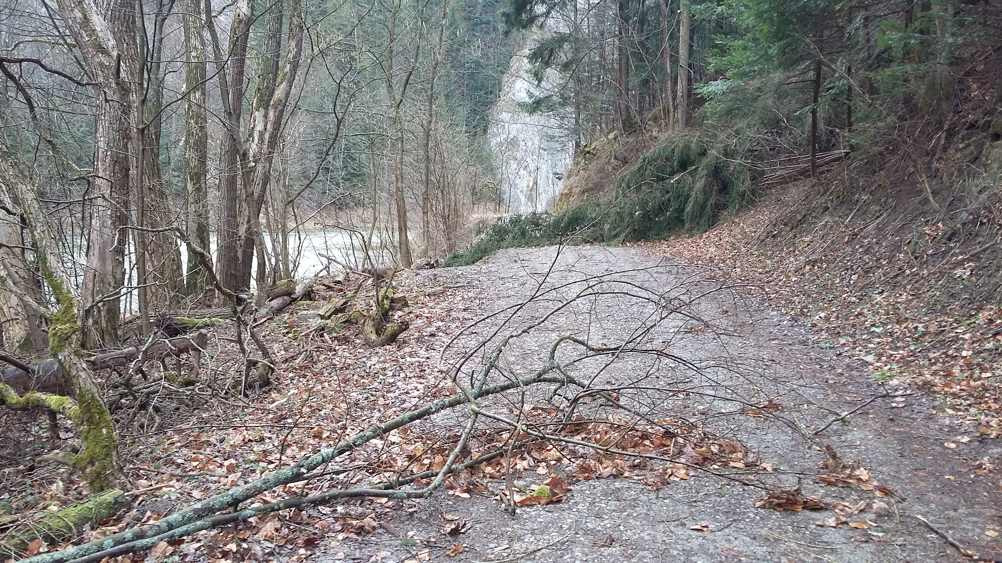 Najviac stromov vietor vyvrátil v oblasti Podspádov a Habovky 652fb404569